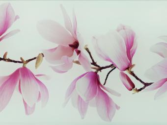 DS Tango Flower