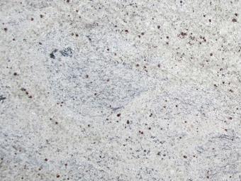 Kashmir White Gránit fényes 30,5 x 61 x 1 cm